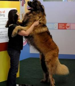World Longest Dogs