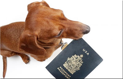 How to bring pet to usa