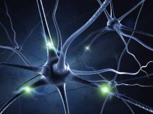 How Many Neurons Are in Our Brain
