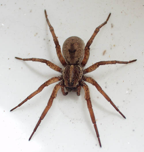 Reason Why Spiders Bite Humans - All in All News