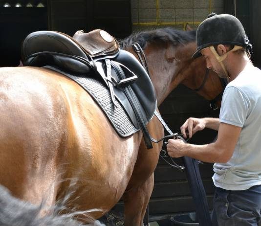 Skills for Working with Horses