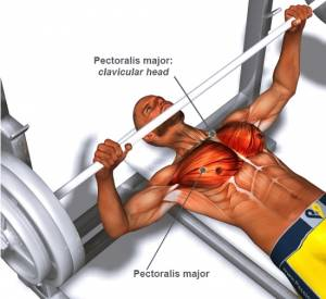How to Bench Press in Perfect Form