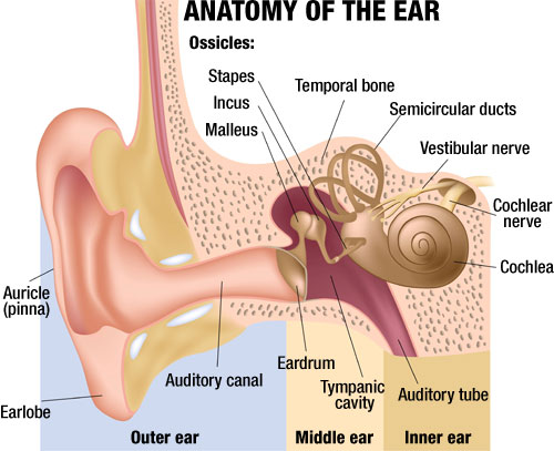 Ear Tube Placement in Adults