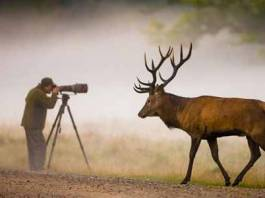 Shoot Photos of Wild Animals