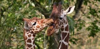 Most Terrific Zoos