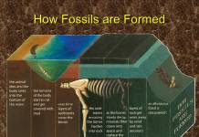 Fossils are Formed
