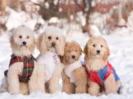Keep Your Dogs Safe During Winter