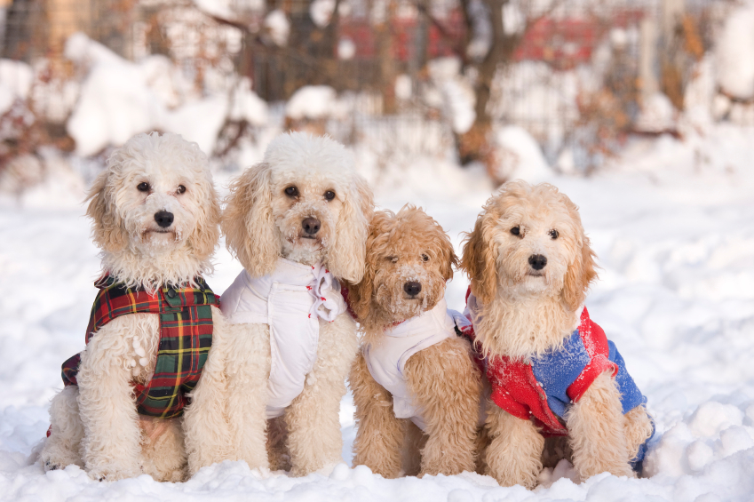 How to Keep Your Dogs Safe During Winter
