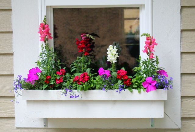 Window Plant Box Garden