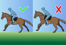 Horseback Riding in Two-Point Position