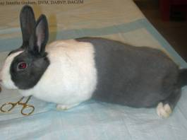 How to Identify Whether Your Rabbit is Sick or Not