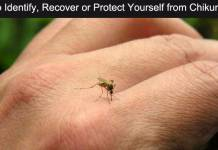 How to Identify, Recover or Protect Yourself from Chikungunya