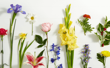 Flowers to Give for Every Birth Month
