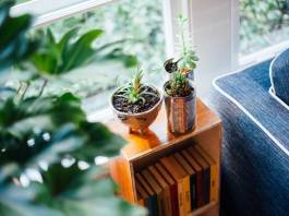 Dying Houseplants What is the Reason